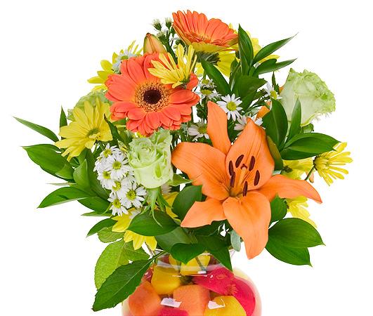 Lasting Blooms