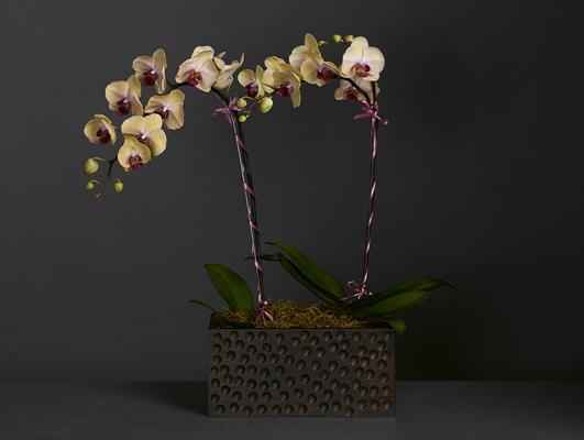 Yellow Phalaenopsis Orchid Planter