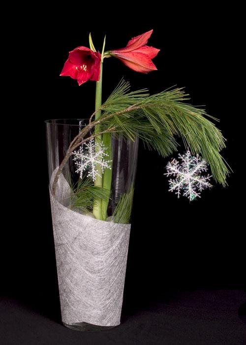 Amaryllis-Snowflake