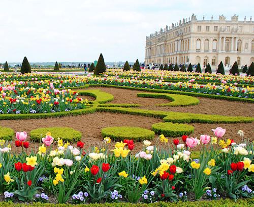 Gardens Of Versailles Flowers 4