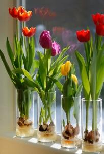 tulip bulns