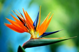 10 Must-See Exotic Flowers From The World