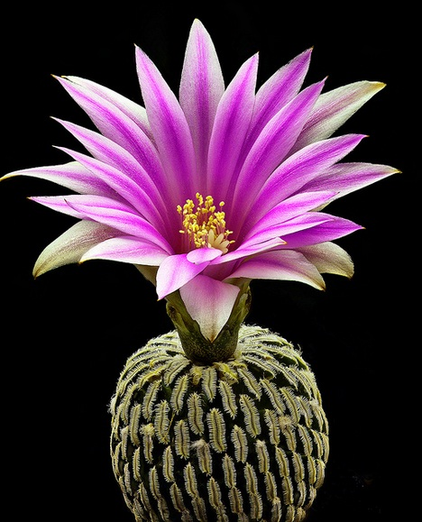 exotic flower names, Beautiful flower