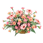 Pink Seasonal Mixed Gift Arrangement