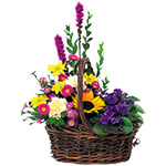 Basket Of Glory - Plant & Flower Basket
