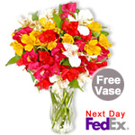 Alstroemeria Sale! $6 off