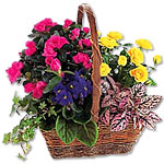 Blooming Planted Basket