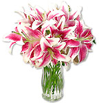 Bedazzled Lilies Sale $4 Off