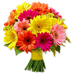 Mixed Gerbera Bouquet Sale! $ 10 Off