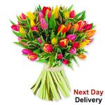 Tulip Sensation