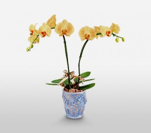 Orchids For Mom In A Decorated Vase