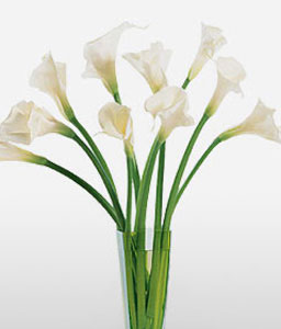 Calla Magic-White,Arrangement