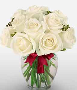 A Dozen White Roses-White,Rose,Arrangement