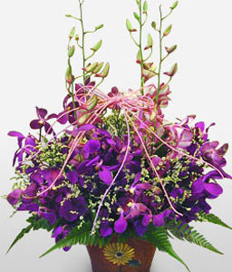 Purple Orchid Basket-Lavender,Pink,Purple,Violet,Orchid,Arrangement