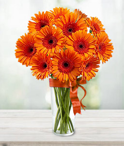 Gerbera Fantasy-Orange,Daisy,Gerbera,Bouquet