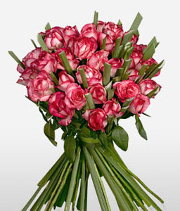 Supernova  Pink <Br><Font Color=Red>Two Dozen Pink Roses </Font>