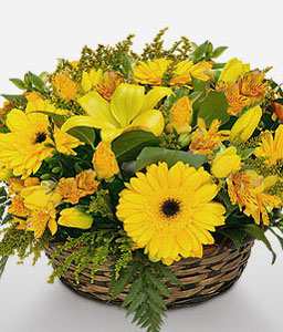 Winning Streak-Yellow,Daisy,Gerbera,Lily,Mixed Flower,Arrangement,Basket