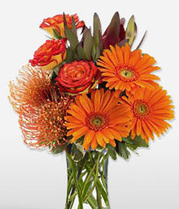 Fireball-Orange,Gerbera,Arrangement