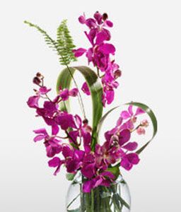 Paradise Queen-Lavender,Purple,Violet,Orchid,Arrangement