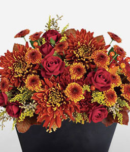 Sunset Beauty-Orange,Red,Carnation,Chrysanthemum,Rose,Arrangement