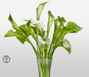 Verdant-Green,White,Lily,Arrangement