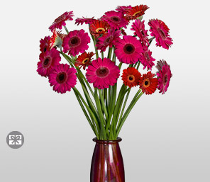 Catwalk-Pink,Purple,Red,Daisy,Gerbera,Arrangement
