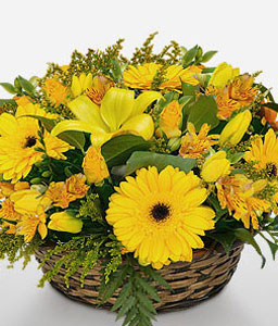 Winning Streak-Yellow,Daisy,Gerbera,Lily,Arrangement,Basket