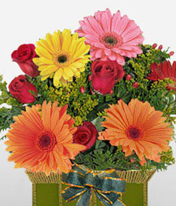 Beau Reveur-Green,Mixed,Orange,Red,Yellow,Daisy,Gerbera,Arrangement