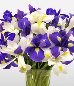 Ocean View-Blue,Purple,White,Iris,Arrangement