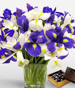 Azure Magic Combo-Blue,White,Chocolate,Iris,Bouquet