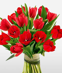 Red Tulips-Red,Tulip,Bouquet