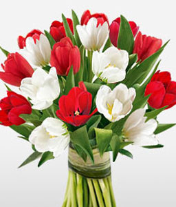 Gracious Tulips-Red,White,Tulip,Bouquet