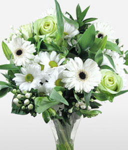 Snow White-Green,White,Gerbera,Rose,Arrangement