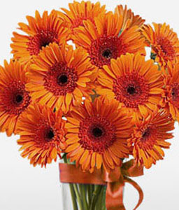 Orange Gerberas-Orange,Gerbera,Bouquet