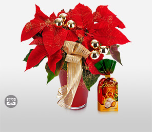 Timeless Poinsettia-Red,Chocolate,Plant