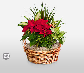 Poinsettia In A Basket-Red,Poinsettia,Arrangement