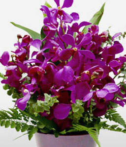 Stylist-Green,Lavender,Purple,Violet,Orchid,Arrangement