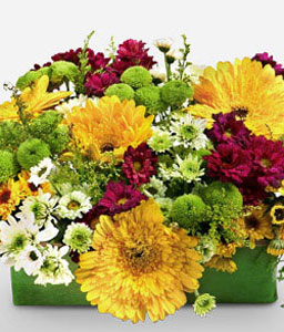 Golden Garden-Garden,Yellow,Mixed,Gerberas