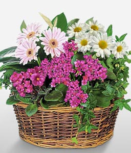 Green Plants Basket
