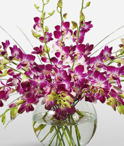 Purple Drops-Pink,Orchid,Arrangement