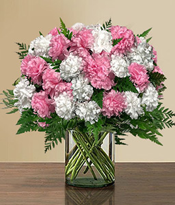 Glowing Carnations-Pink,White,Carnation,Bouquet