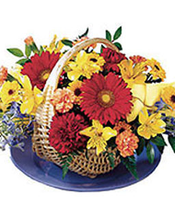 Crescendo Of Color-Mixed,Red,Yellow,Alstroemeria,Daisy,Mixed Flower,Arrangement