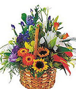 First Bloom-Mixed,Daisy,Gerbera,Iris,Mixed Flower,SunFlower,Arrangement,Basket