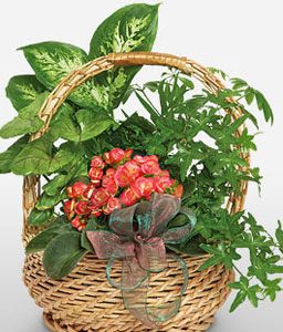 Arrangement Of Plants-Plant