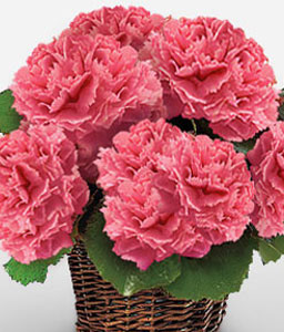 Splendid Arcadia - Pink Carnations-Pink,Carnation,Arrangement,Basket