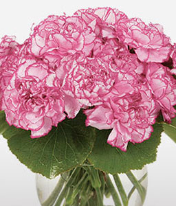 Blushing Pink Carnations-Pink,Carnation,Arrangement