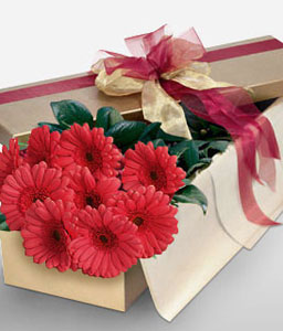 Adorable Gerberas-Red,Gerbera,Arrangement
