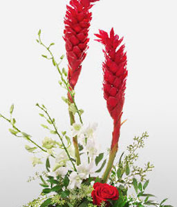 Dance Of Romance-Red,White,Orchid,Rose,Arrangement