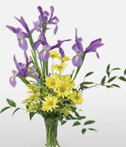 Purple Haze-Mixed,Purple,Yellow,Daisy,Iris,Mixed Flower,Arrangement