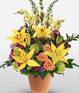 Greetings And Cheers-Orange,Yellow,Lily,Mixed Flower,Rose,Arrangement
